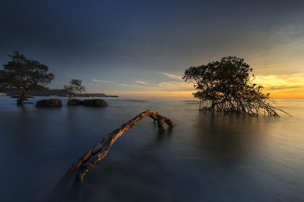 Aus Mangrovenholz entsteht oft Treibholz